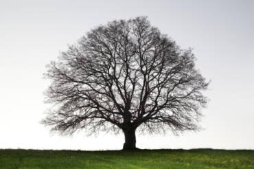Les bienfaits de l'arbre